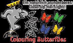 Colouring Butterflies